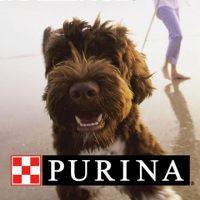 Purina Case Study